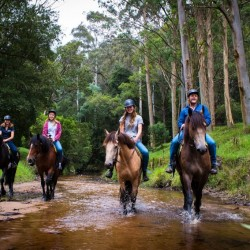 Adrenalin Activities Kempsey